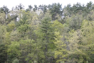 The Kestrel Land Trust and Belchertown Conservation Commission acquired over 100 acres for conservation.