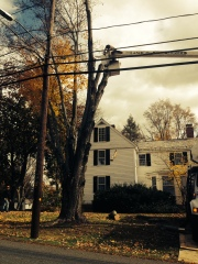 A tree crew removes a tree between a house and power lines in South Amherst